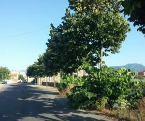 «Curiamo il verde pubblico di Milazzo coinvolgendo associazioni no profit»