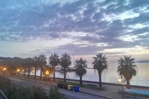 Le palme della Marina Garibaldi attaccate dal punteruolo rosso