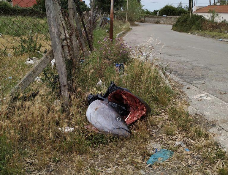 Milazzo, testa di tonno abbandonata sul ciglio della strada